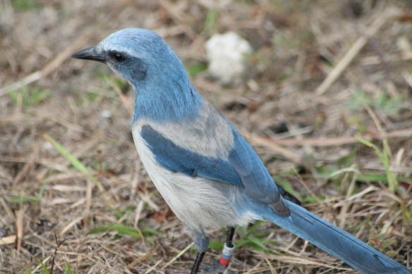 Week 29 Oscar Scherer Birds 030