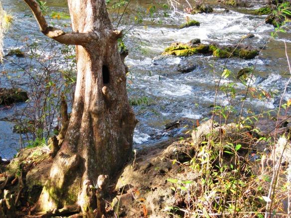 Hillsborough River 005