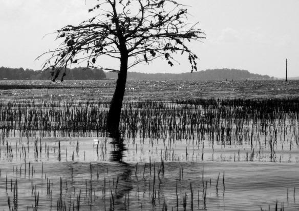 101 Strings - African Safari
