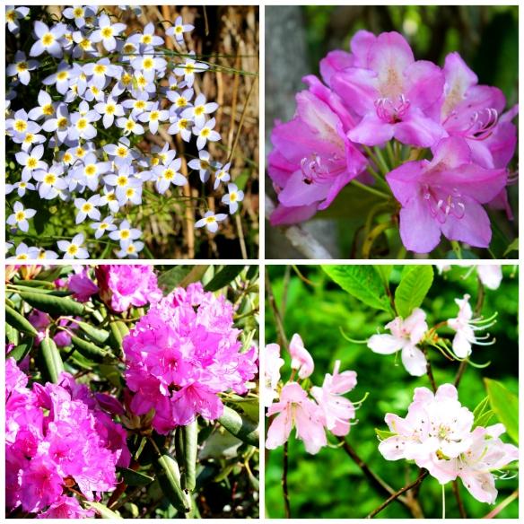 Flower Collage