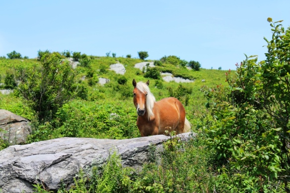 Grayson Highlands 049