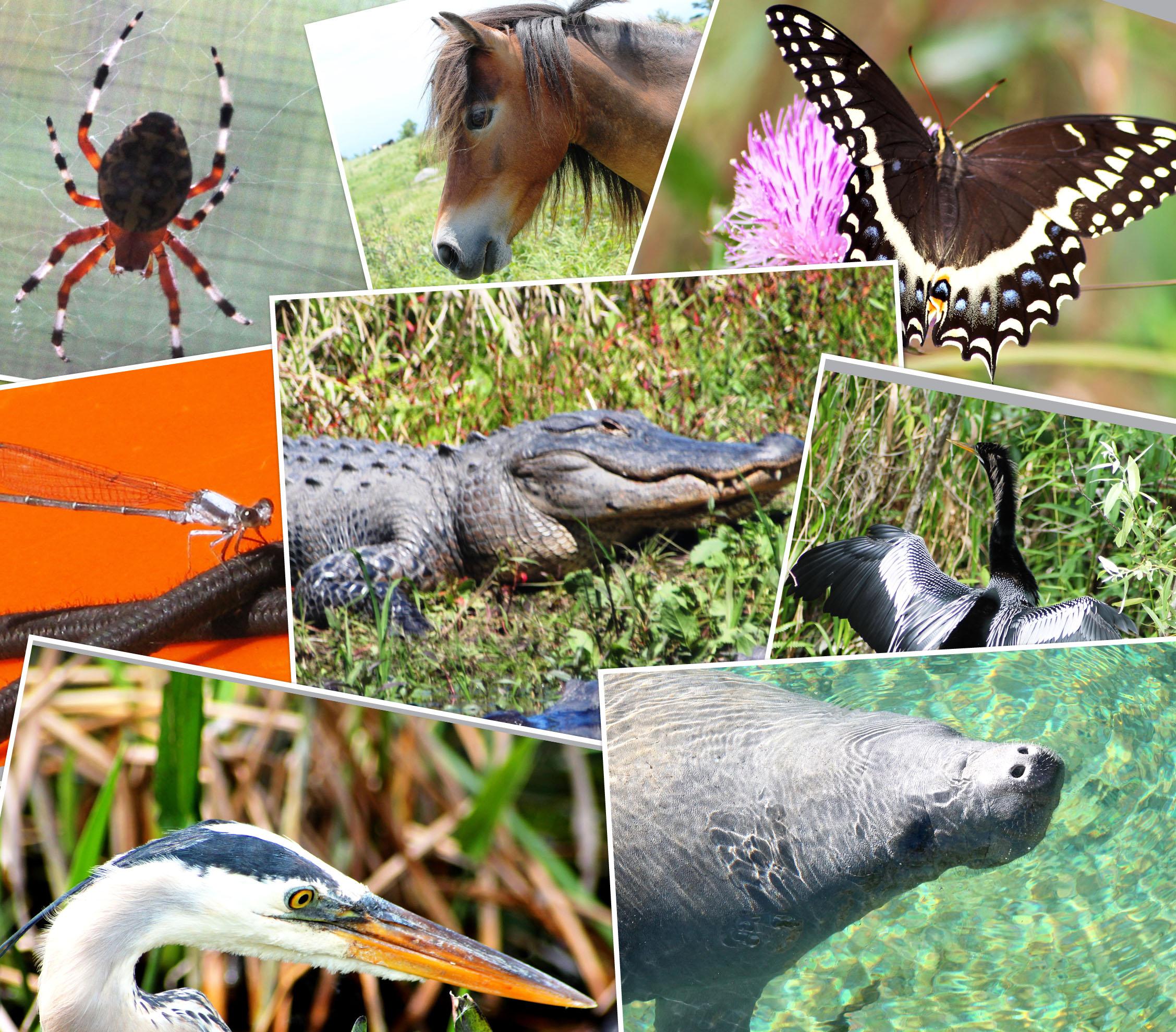 Best Wallpaper Horse Collage - wildlife-collage  HD_355749.jpg